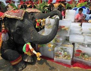 elephantice1